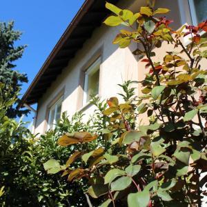 Hotel Pictures: Ferienwohnung Roser, Teningen