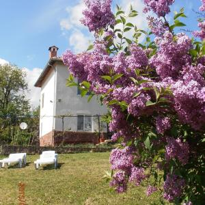 Hotel Pictures: Venikula Guest House, Lovnidol