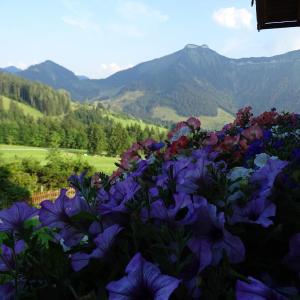 Photos de l'hôtel: Reitlhof, Krispl