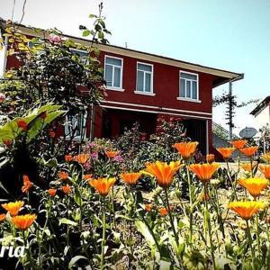 Φωτογραφίες: Guest House Guriis Khibli, Ozurget'i