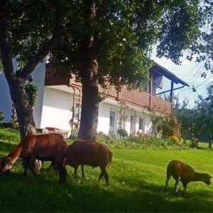 Hotelbilleder: Ferienhof Pfeffer, Lam