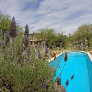 Hotellbilder: Cabañas de Montaña Rio Amarillo, Chilecito