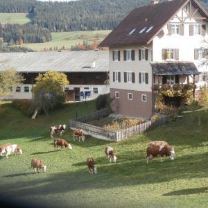 Hotelbilleder: Apartment Sattelbauer, Birkfeld