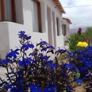 Zdjęcia hotelu: Cabañas Lunita, Fiambala
