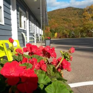 Hotel Pictures: Cornerstone Motel, Chéticamp