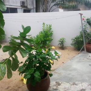 Hotel Pictures: Coco City deluxe villa, Cotonou