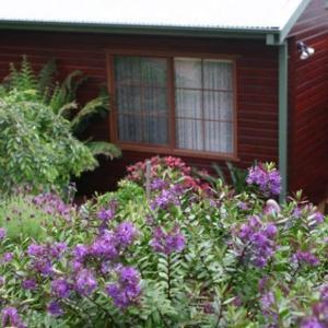 Photos de l'hôtel: Bluebell Cottage, Leura