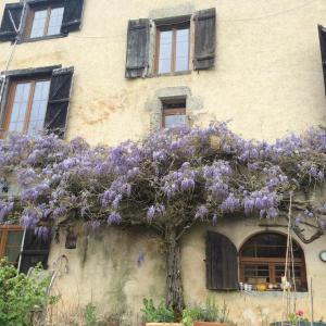 Hotel Pictures: Le Palland, Moissannes