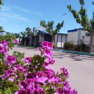 Hotel Pictures: Camping y Bungalows Monmar, Moncófar