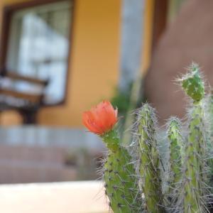 Fotos de l'hotel: Complejo Dulcería El Cazador y cabañas, Tandil