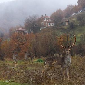 Hotelbilleder: Villa Fauna, Rakitna