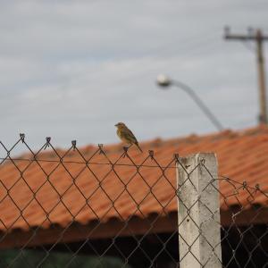 Hotel Pictures: Pousada Kohara, Ilha Solteira