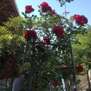 Φωτογραφίες: Guest House Smile, Kobuleti