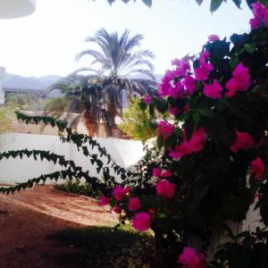 Hotel Pictures: Blue Water Apartment, Dahab