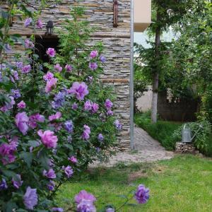 酒店图片: Guesthouse Viktoria, Peshtera