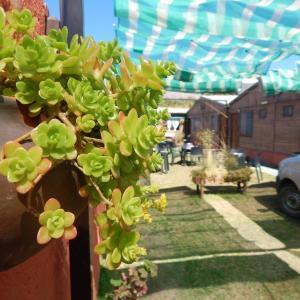 Fotos do Hotel: Hostal del Suri, Cafayate
