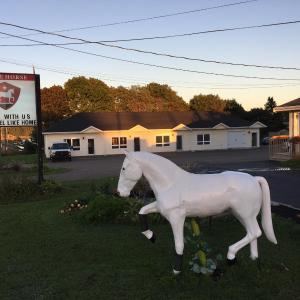 Hotel Pictures: The White Horse Motel, Charlottetown