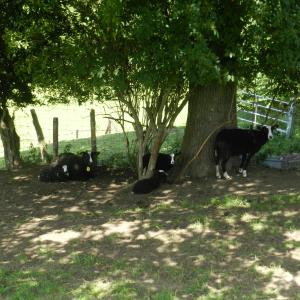 Zdjęcia hotelu: Xhawirs Horse Farm, Soumagne