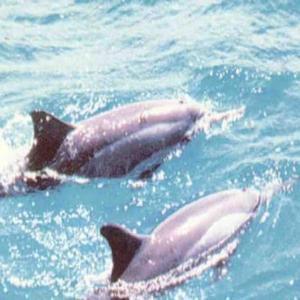 Hotel Pictures: Solar dos Golfinhos, Tabatinga