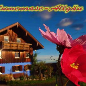 Hotelbilleder: Blumenoase Allgäu, Schwanden