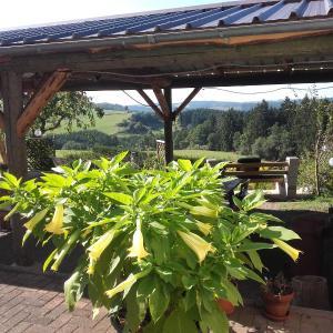 Hotel Pictures: Pension Froschloch, Lützkampen