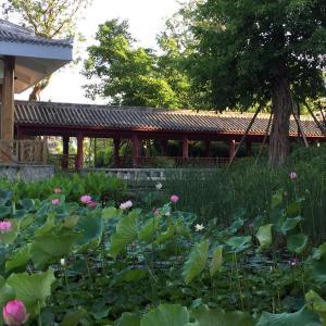 Hotel Pictures: Lotus Yard Zen Hotel, Suining