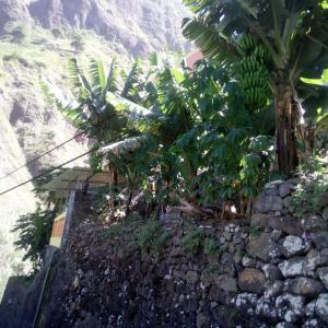 Hotel Pictures: kasa xoxo, Ribeira Grande