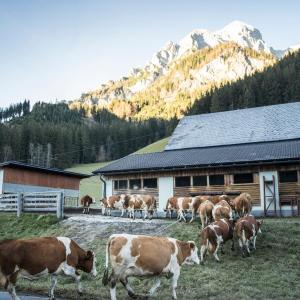 Hotel Pictures: Mayrhof, Unternberg