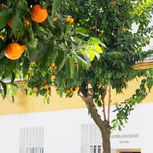 Hotel Pictures: Laprin Apartment, Córdoba