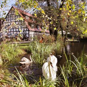 Hotelbilleder: Springbach-Mühle Belzig, Bad Belzig