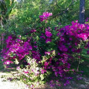 Hotellbilder: Aracataca - la casita del tigre, Dique Luján