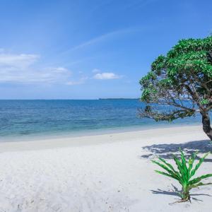 Hotelfoto's: Trikora Beach Club, Teluk Bakau