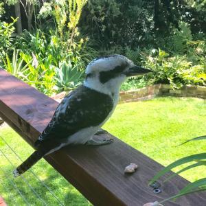 Fotos del hotel: Garden Studio, Blairgowrie