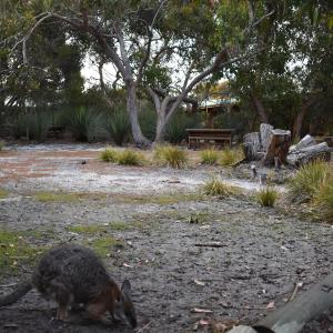 酒店图片: Kangaroo Island Wilderness Retreat, 弗林德斯彻斯