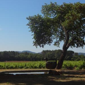 Hotel Pictures: Chateau Nestuby, Cotignac