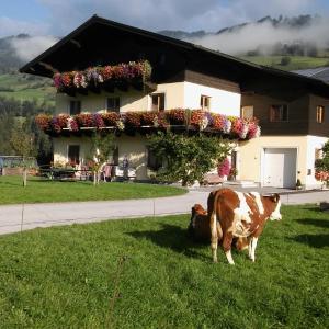 Foto Hotel: Rieserhof/Fam. Meißnitzer, Taxenbach