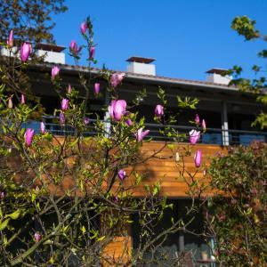 Hotel Pictures: Apartamentos Casona de la Paca, Cudillero