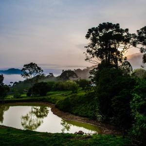 Hotel Pictures: Pousada Fundação Caminho dos Ipês, Passa Vinte