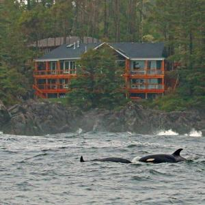 Hotel Pictures: Melfort Bell Guest Suites, Ucluelet