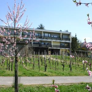 Hotel Pictures: Weinblick, Wintrich