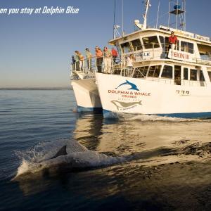 Fotos do Hotel: Dolphin Blue, Vincentia