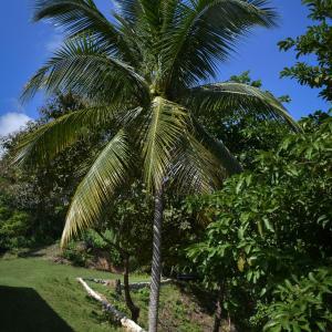 Hotel Pictures: Posada Entre Bosques Tayrona, Los Naranjos