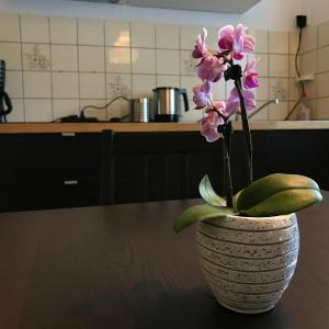 Hotelbilleder: Apartmenthaus Marten, Marten