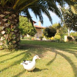 Hotel Pictures: Casa Torreteyera, Villaviciosa