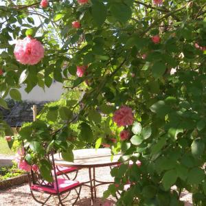 Hotel Pictures: Le Jardin, Laragne
