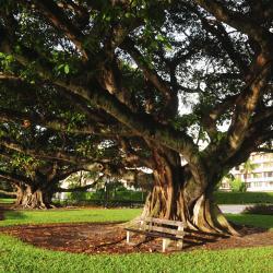 Palm Beach Gardens 22 hotéis