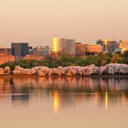 Arlington 142 hotéis