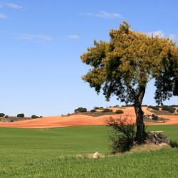 Los mejores hoteles cerca de Tarancón (ES) | Booking.com