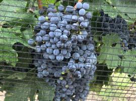 Chaglasian Wine & Suites, San Rafael