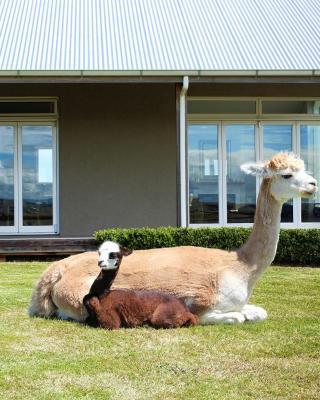 Gallin Farm Alpacas and Farmstay